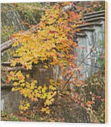 Autumn Steps Near Smalls Falls In Maine Wood Print