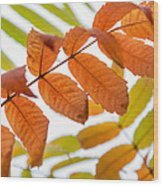 Autumn Upshot Wood Print