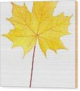 Autumn Yellow Maple Leaf  Wood Print