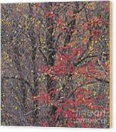 Autumn's Palette Wood Print
