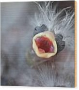 Baby Bird Wood Print