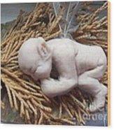 Baby Fae Wood Print