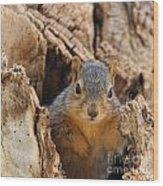 Baby Fox Squirrel Wood Print