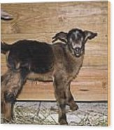 Baby Goats Wood Print