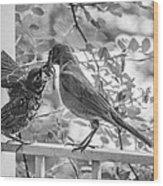 Baby Robin - Yummy Wood Print