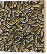 Bacteria, Sem Wood Print