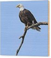 Bald Eagle 6 Wood Print