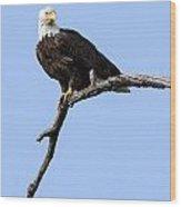 Bald Eagle 7 Wood Print