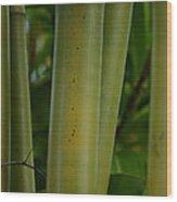 Bamboo II Wood Print