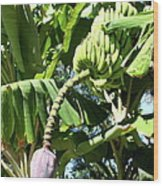 Banana Tree Wood Print