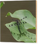 Banded Pennant Dragonfly Wood Print