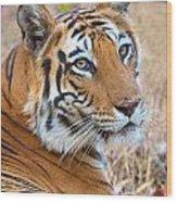 Bandhavgarh Tigeress Wood Print