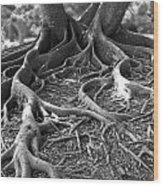 Banyan Roots - 24 X 36 Wood Print