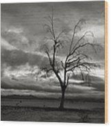 Bare Tree Wood Print