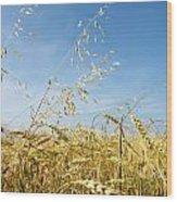 Barley And Oat Vertical Wood Print
