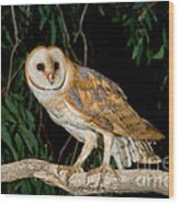 Barn Owl Wood Print
