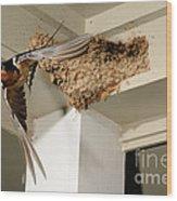 Barn Swallow Wood Print by Scott Linstead