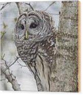 Barred Owl Wood Print