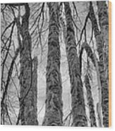 Barren Wood Print