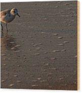 Beach Wildlife Wood Print