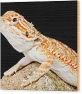 Bearded Dragon Pogona Sp. On Rock Wood Print