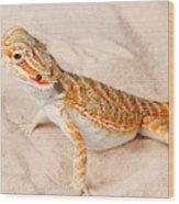 Bearded Dragon Pogona Sp. On Sand Wood Print