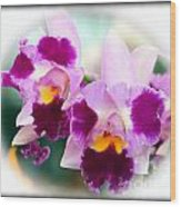 Beautiful Array Of Purple Butterfly Orchids Wood Print