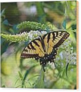 Beautiful Butterfly Pollination Wood Print