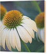 Beautiful Coneflowers Wood Print