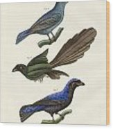 Beautiful Foreign Birds Wood Print