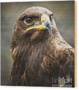 Beautiful Golden Eagle Portrait Wood Print