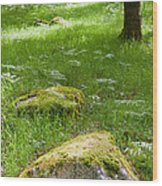 Beautiful Lush Vobrant Image Of Ancient Woodland Wood Print by Matthew Gibson
