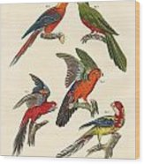 Beautiful Parrots Wood Print