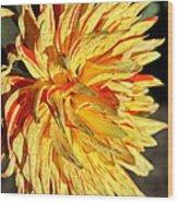 Beauty In The Sun Wood Print