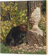 Beaver   Castor Canadensis Wood Print