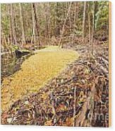 Beaver Dam In Fall Colored Forest Wetland Swamp Wood Print