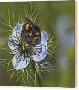 Bee Collecting Pollen Wood Print
