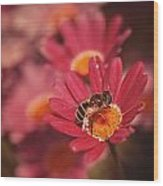 Bee On A Pink Daisy Wood Print