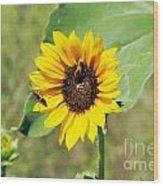 Bee Sunflower Wood Print