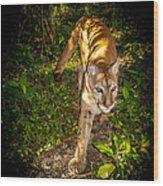 Belize Mountain Lion Wood Print