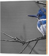 Belted Kingfisher Wood Print
