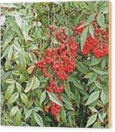 Berry Bush Wood Print