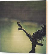 Bird Watching Wood Print