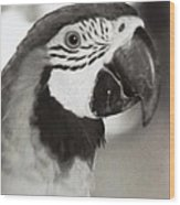 Black And White Parrot Beauty Wood Print