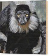 Black And White Ruffed Lemur Wood Print