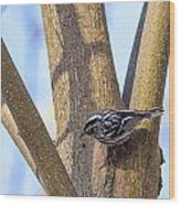 Black And White Warbler Wood Print