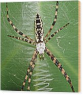 Black And Yellow Garden Spider Wood Print