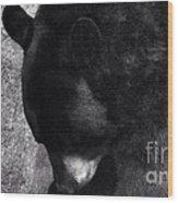 Black Bear Curtsy  Wood Print