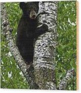 Black Bear  Ursus Americanus Wood Print