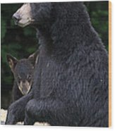 Black Bear With Cub Wood Print